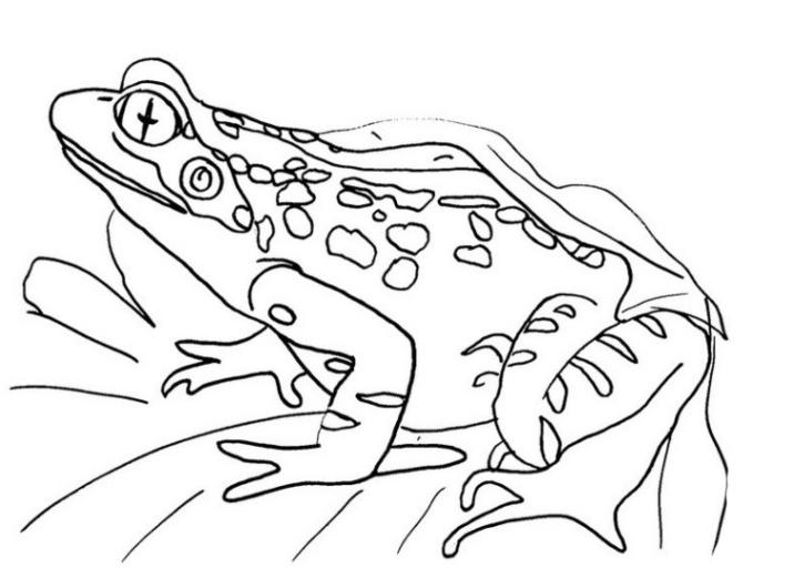 ausmalbilder zum drucken malvorlage frosch kostenlos 1