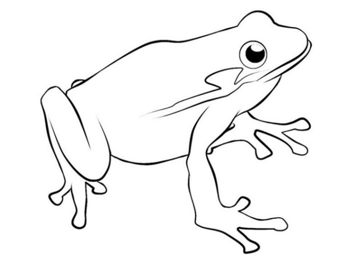 beste 20 frosch ausmalbilder zum ausdrucken  beste