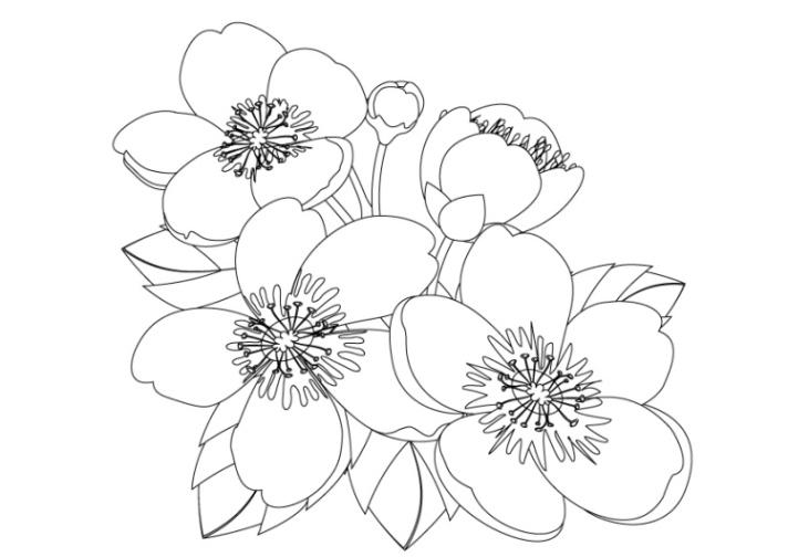 ausmalbilder zum drucken malvorlage pflanzen kostenlos 2