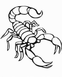Malvorlagen Skorpion Kostenlos Coloring And Malvorlagan