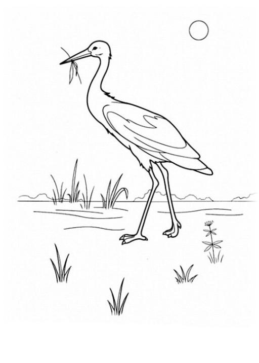 ausmalbilder zum drucken malvorlage vögel kostenlos 1