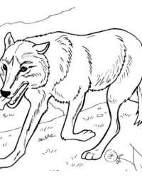 malvorlagen von wolf kostenlos zum ausdrucken