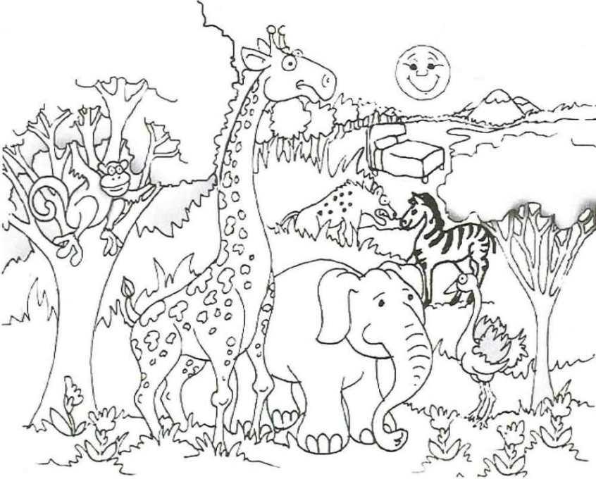 malvorlage tiere zoo  kinder malvorlagen ideas in 2021