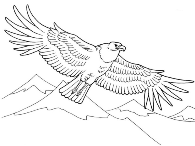 Ausmalbilder Zum Drucken Malvorlage Adler Kostenlos 3