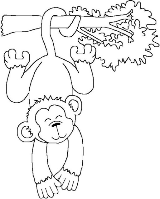 Ausmalbilder zum Drucken Malvorlage Affe kostenlos 4