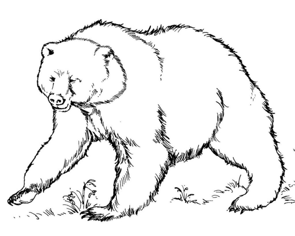 bear coloring pages sparklebox free - photo#21