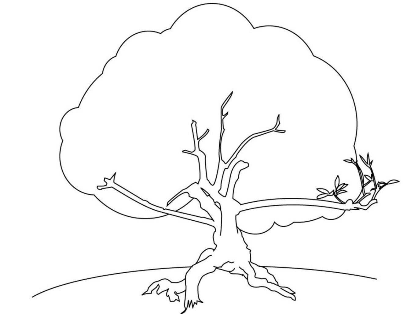 Ausmalbilder zum Drucken Malvorlage Baum kostenlos 3