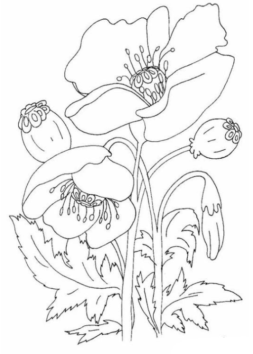 Malvorlage Blumen kostenlos 1