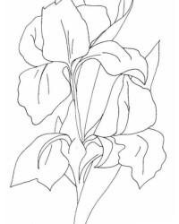 Malvorlage Blumen kostenlos 3