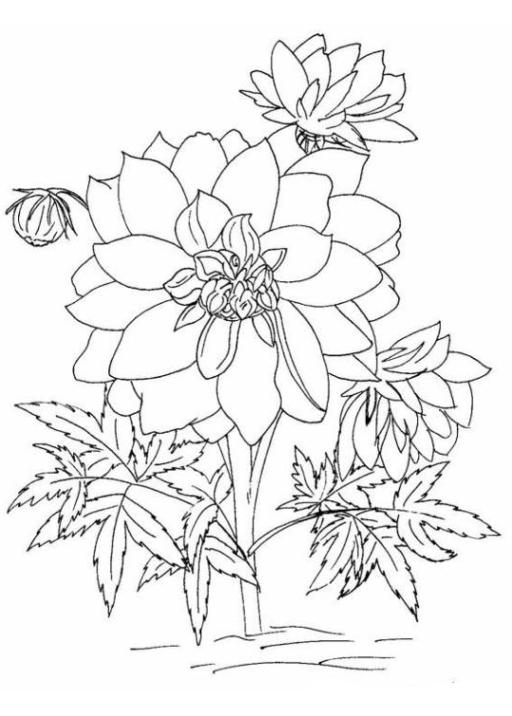 Malvorlage Blumen kostenlos 4