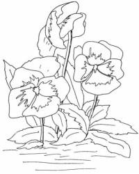 Malvorlage Blumen kostenlos 5