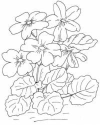 Malvorlage Blumen kostenlos 6