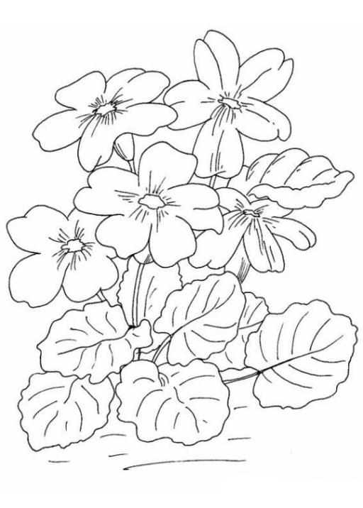 Ausmalbilder Zum Drucken Malvorlage Blumen Kostenlos 6