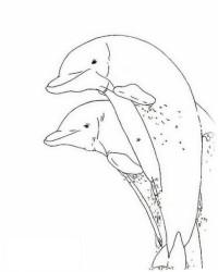 Malvorlage Delphine kostenlos 5