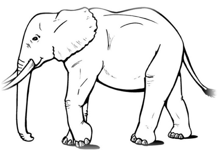 Ausmalbilder zum Drucken Malvorlage Elefant kostenlos 5
