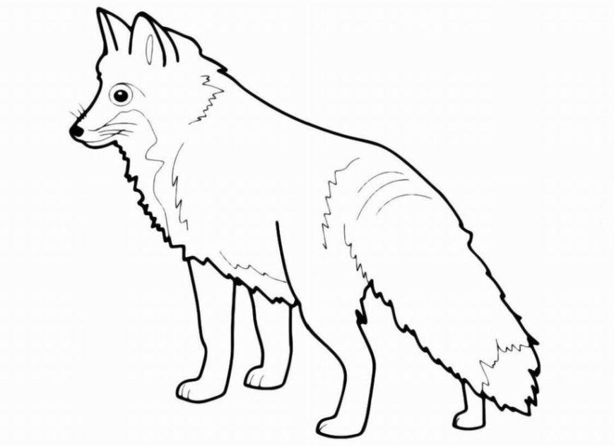 Ausmalbilder Zum Drucken Malvorlage Fuchs Kostenlos 3