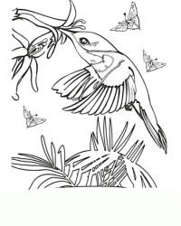 malvorlagen von kolibri kostenlos zum ausdrucken