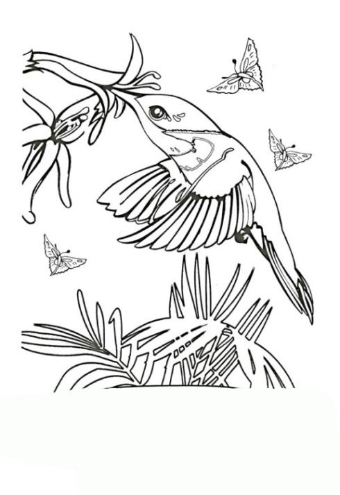 ausmalbilder zum drucken malvorlage kolibri kostenlos 1