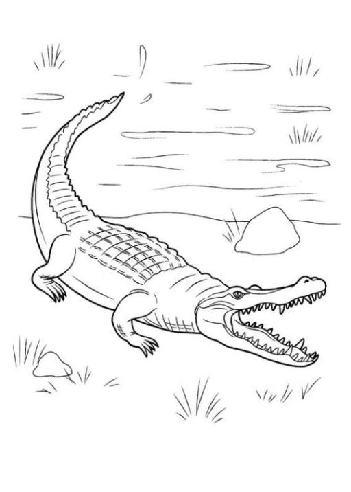 Ausmalbilder Zum Drucken Malvorlage Krokodil Kostenlos 2