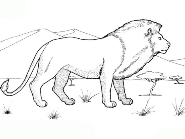 Ausmalbilder zum Drucken Malvorlage Löwe kostenlos 1