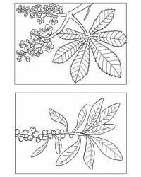 Malvorlage Laub Blätter kostenlos 1