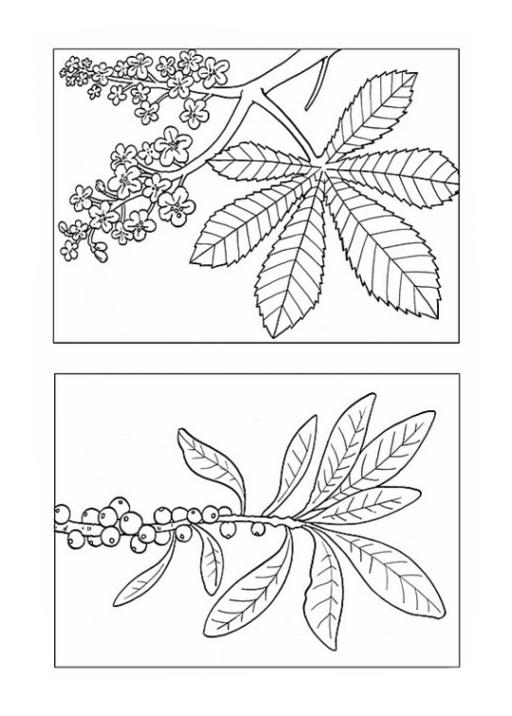 Ausmalbilder Zum Drucken Malvorlage Laub Blätter Kostenlos 1