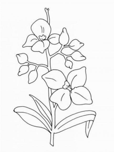 Ausmalbilder zum Drucken Malvorlage Orchidee kostenlos 3