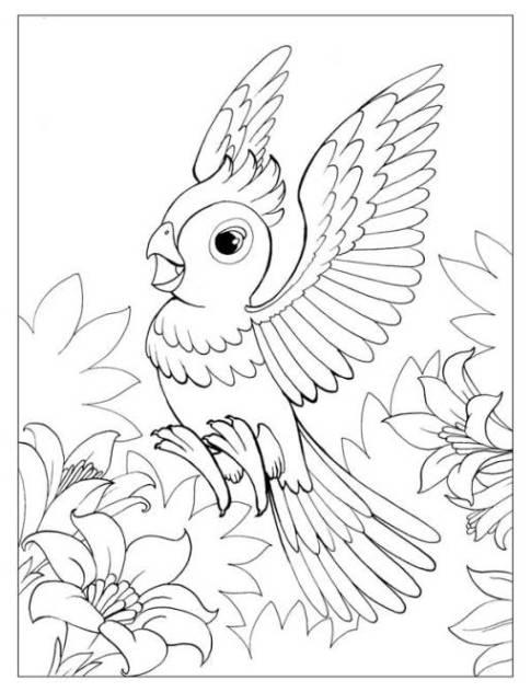 Ausmalbilder zum Drucken Malvorlage Papagei kostenlos 3
