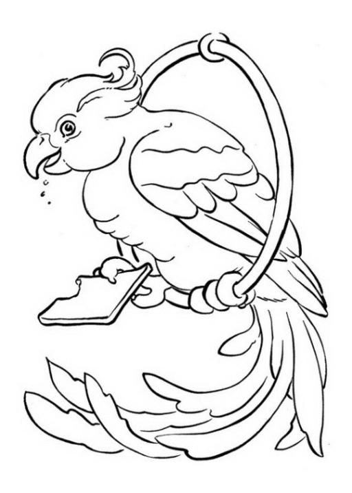 Ausmalbilder zum Drucken Malvorlage Papagei kostenlos 4