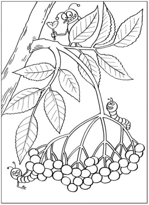 Ausmalbilder Zum Drucken Malvorlage Pflanzen Kostenlos 3