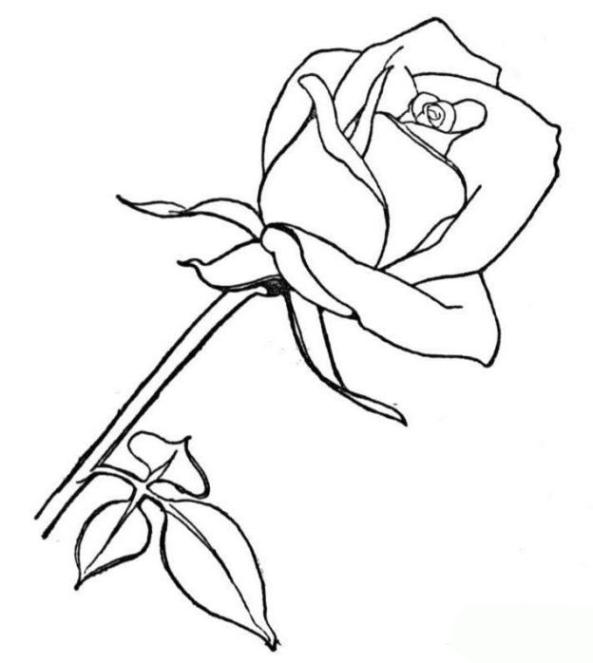 Ausmalbilder Zum Drucken Malvorlage Rose Kostenlos 2