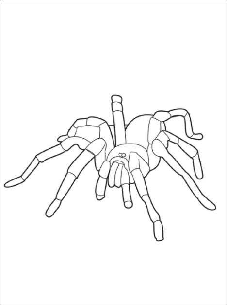 Ausmalbilder Zum Drucken Malvorlage Spinne Kostenlos 1