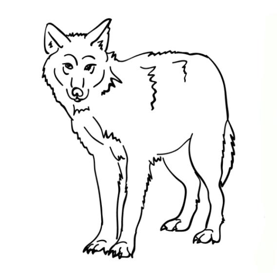 ausmalbilder zum drucken malvorlage tiere kostenlos 1