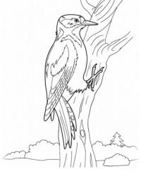malvorlagen von vögel kostenlos zum ausdrucken