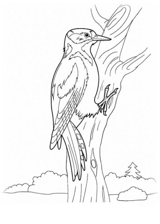 Ausmalbilder Zum Drucken Malvorlage Vögel Kostenlos 4