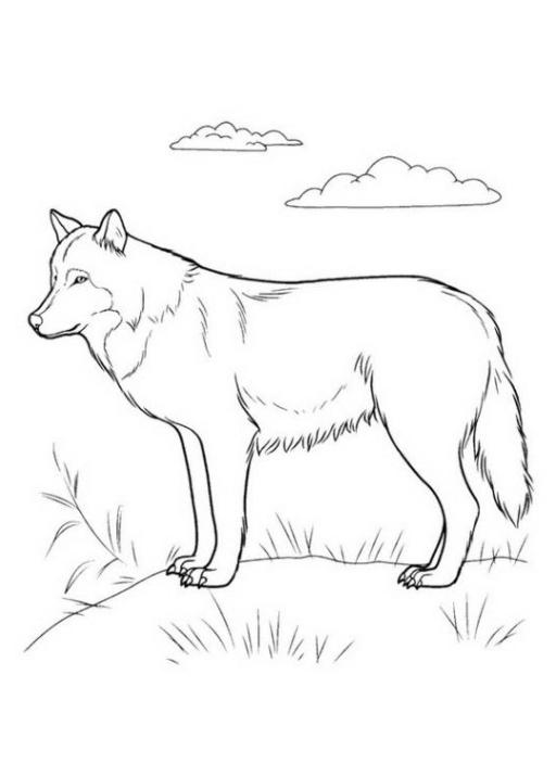ausmalbilder zum drucken malvorlage wolf kostenlos 1