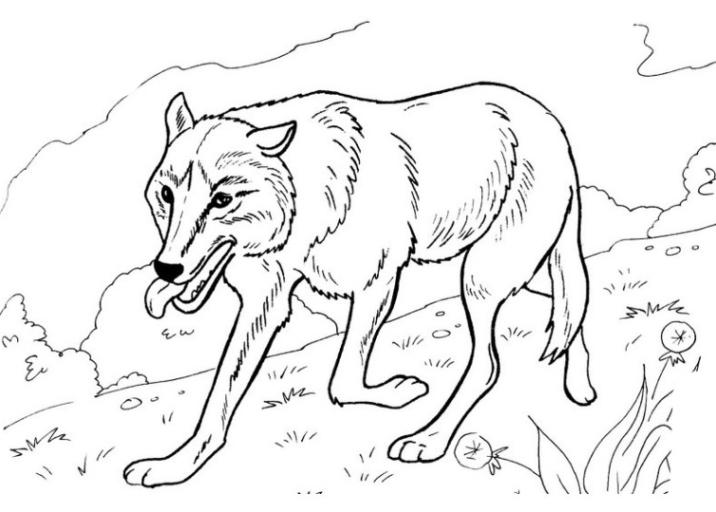 Ausmalbilder Zum Drucken Malvorlage Wolf Kostenlos 3