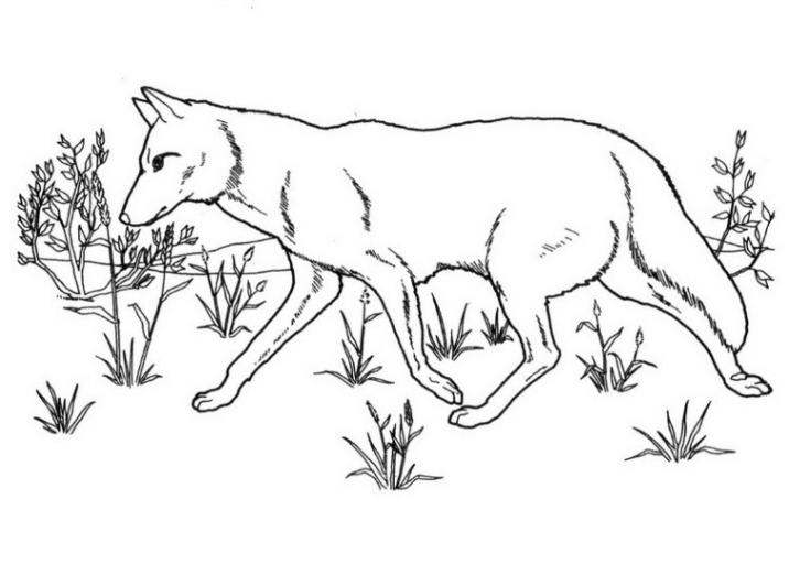 Ausmalbilder Zum Drucken Malvorlage Wolf Kostenlos 6