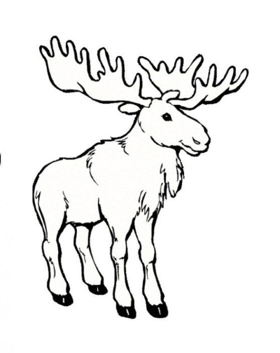 Ausmalbilder zum Drucken Malvorlage elch kostenlos 2