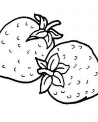 Malvorlage erdbeere kostenlos 2