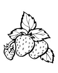 Malvorlage erdbeere kostenlos 3
